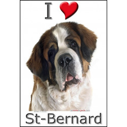 """I love St-Bernard"" Sticker photo 3 tailles, 4 possibilités !"