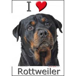 Sticker autocollant, Rottweiler Tête, 4 tailles, 4 possibilités !