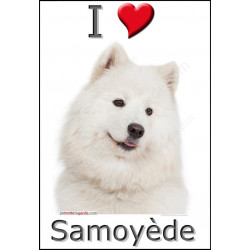 Sticker autocollant, Samoyède Tête, 4 tailles, 4 possibilités !