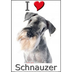 """I love Schnauzer"" Sticker photo 4 tailles, 4 possibilités !"