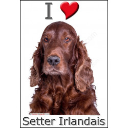 """I love Setter Irlandais"" Sticker photo 4 tailles, 4 possibilités !"