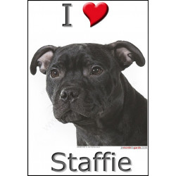 """I love Staffie"" Sticker photo 4 tailles, 4 possibilités !"