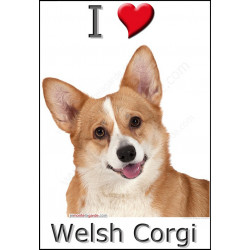 """I love Welsh Corgi"" Sticker photo 4 tailles, 4 possibilités !"