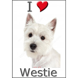 """I love Westie"" Sticker photo 4 tailles, 4 possibilités !"