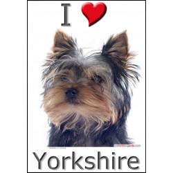 Sticker autocollant, Yorkshire Tête, 4 tailles, 4 possibilités !