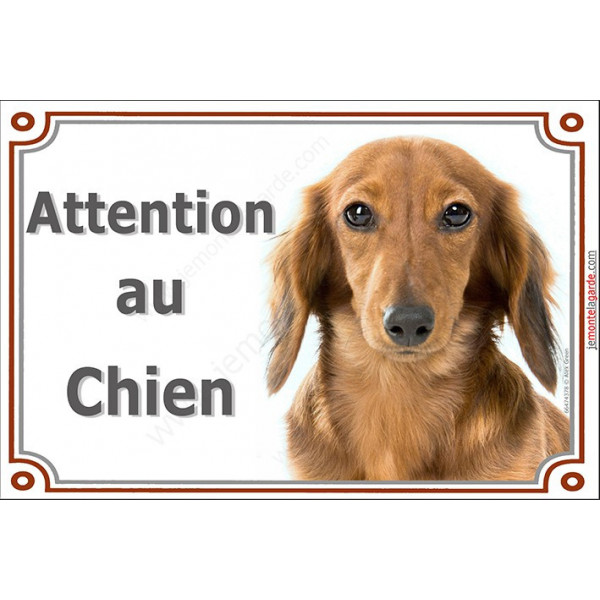 Plaque portail Attention au Chien, Teckel fauve poils longs Tête pancarte panneau marron tequel orange