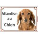 Plaque 2 tailles LUXE Attention au Chien, Teckel fauve poils longs Tête