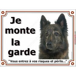 Plaque portail 2 tailles Je Monte la Garde, Berger Hollandais bringé poils longs Tête risques et périls pancarte panneau bringué