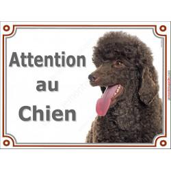 Plaque portail 2 tailles Attention au Chien, Caniche Marron Chocolat Tête pancarte panneau brun