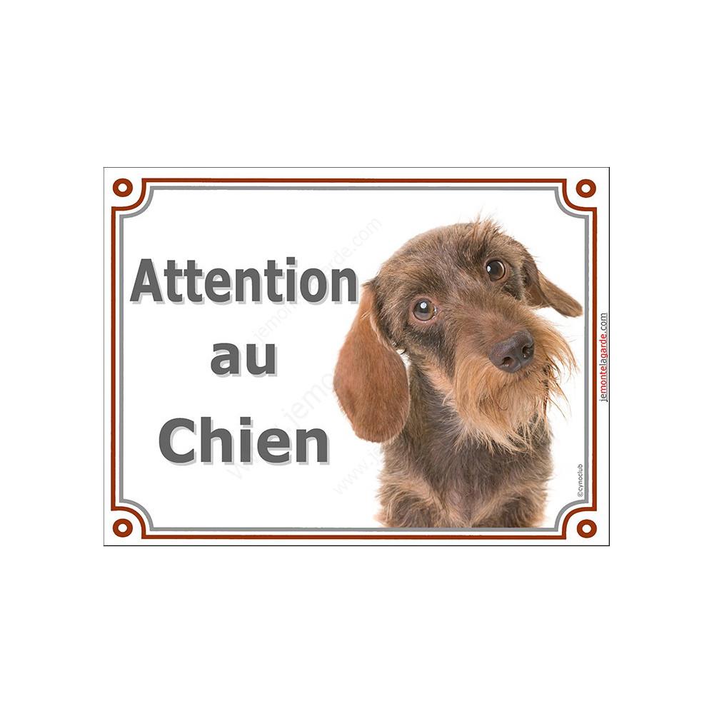 Teckel Fauve Poils Durs Tete Plaque Portail Attention Au Chien