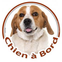 """Sticker rond """"Chien à Bord"""" 15 cm, Beagle blanc et fauve Tête, autocollant marron voiture"""