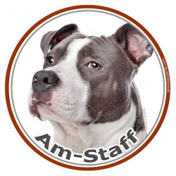 Am-Staff Bleu, sticker autocollant photo rond 15 cm