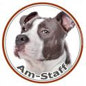 Am-Staff Bleu, sticker autocollant photo rond 15 cm