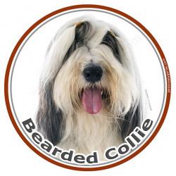 Bearded Collie Blanc et Noir, sticker autocollant photo ronds Disque adhésif Collie barbu