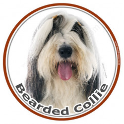 Stickers ronds 15 cm, Bearded Collie Blanc et Noir Tête