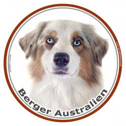 Sticker rond 15 cm, Berger Australien Blanc et Rouge Merle Tête