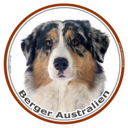 Sticker rond 15 cm, Berger Australien Bleu Merle Tête