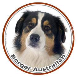 Berger Australien Tricolore Noir Tête, sticker autocollant rond Disque adhésif photo race chien