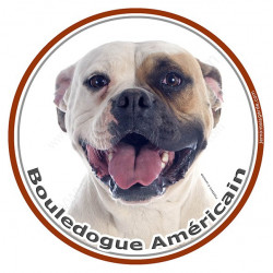 Sticker autocollant rond 15 cm, Bouledogue Américain Blanc-Fauve Tête, Bulldog USA adhésifs