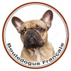 Bouledogue Français, sticker photo rond 15 cm