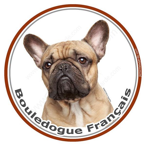 Sticker autocollant rond 15 cm, Bouledogue Français Fauve Tête, adhésif
