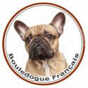 Sticker rond 15 cm, Bouledogue Français Fauve Tête