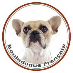 Sticker rond 15 cm, Bouledogue Français Caille Fauve Tête