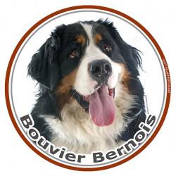 Sticker rond 15,5 cm, Bouvier Bernois Tête