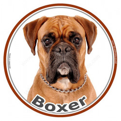 Sticker autocollant rond 15 cm, Boxer Fauve Tête, adhésif marron, photo race chien
