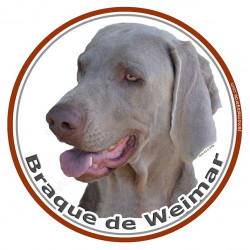 Braque de Weimar, sticker autocollant rond photo 15 cm