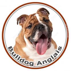 Sticker autocollant rond 15 cm, Bulldog Anglais Fauve Tête, adhésif