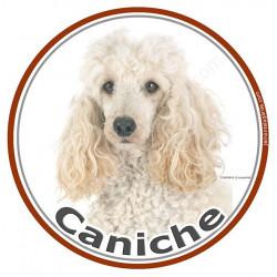 Sticker rond 15 cm, Caniche Blanc Tête