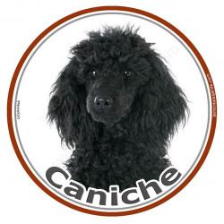 Sticker autocollant rond 15 cm, Caniche Noir Tête, adhésif