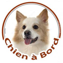 """Sticker rond """"Chien à Bord"""" 15 cm, Berger Islandais Tête"""