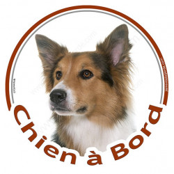 "Sticker rond ""Chien à Bord"" 15 cm, Border Collie tricolore Tête"