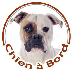 """Sticker autocollant rond """"Chien à Bord"""" 15 cm, Bouledogue Américain Blanc-Fauve Tête, adhésif vitre voiture, Bulldog"""