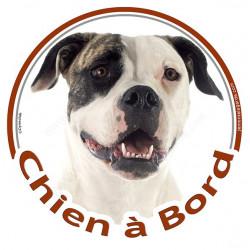 """Sticker rond """"Chien à Bord"""" 15 cm, Bouledogue Américain Bringé Tête"""