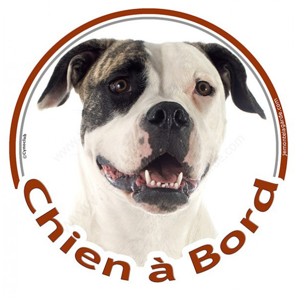 """Sticker autocollant rond """"Chien à Bord"""" 15 cm, Bouledogue Américain Bringé Tête, adhésif vitre voiture, Bulldog"""