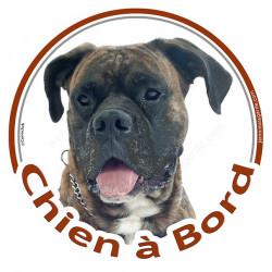 """Sticker autocollant rond """"Chien à Bord"""" 15 cm, Boxer bringé Tête, adhésif vitre voiture auto, bringué marron"""