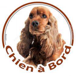 """Sticker autocollant rond """"Chien à Bord"""" 15 cm, Cocker Anglais Golden roux marron Tête, adhésif vitre voiture"""