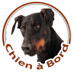 """Sticker autocollant rond """"Chien à Bord"""" 15 cm, Doberman Tête, adhésif vitre voiture chien"""