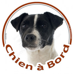 """Sticker autocollant rond """"Chien à Bord"""" 15 cm, Jack Russell Terrier blanc et noir Tête, adhésif vitre voiture"""
