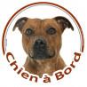 """Sticker rond """"Chien à Bord"""" 15,5 cm, Staffie fauve marron Tête"""