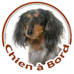 """Sticker autocollant rond """"Chien à Bord"""" 15 cm, Teckel tricolore merle à poils longs Tête, adhésif vitre voiture"""