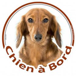 """Sticker autocollant rond """"Chien à Bord"""" 15 cm, Teckel fauve marron à poils longs Tête, adhésif vitre voiture"""