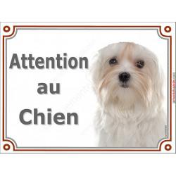 Plaque portail 2 tailles LUXE Attention au Chien, Bichon Maltais tête, pancarte panneau affiche
