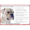 Plaque 24 cm CDT, 8 Souhaits Secrets, Bouledogue Américain blanc Tête
