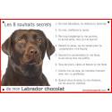 Plaque 24 cm CDT, 8 Souhaits Secrets, Labrador Chocolat Tête