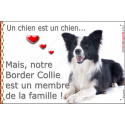 "Border Collie couché, plaque ""Membre de la Famille"" 24 cm LOV"