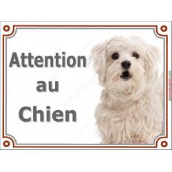 Plaque 2 tailles LUXE Attention au Chien, Bichon Maltais Tête, pancarte panneau